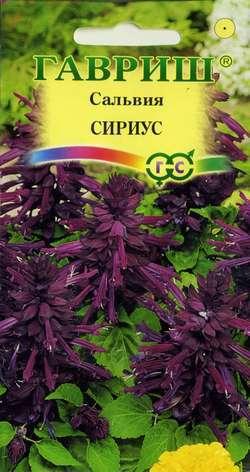 Сальвия Сириус карликовая 5 шт.