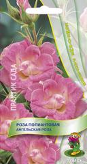 Роза Ангельская роза  5шт